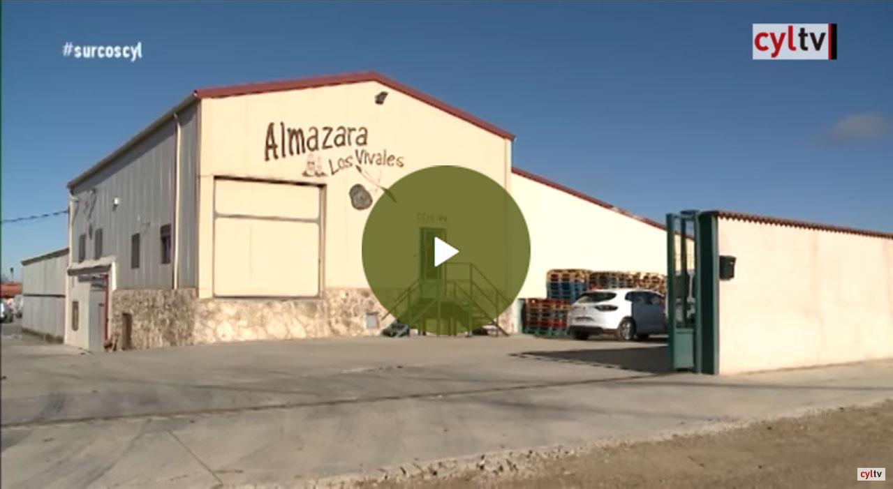 reportaje-Surcos-almazara-vivales
